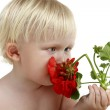 Boy smells a red flower — Stock Photo #1597270