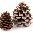 Coniferous cones - Stock Photo