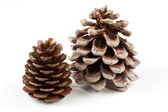Coniferous cones — Stock Photo