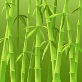 Bamboo trees — Foto de Stock