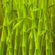 Bamboo trees - Stock Photo