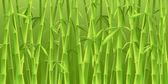 中国の竹の木 — ストック写真