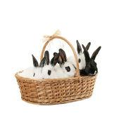 Cute bunnies — Stock Photo