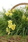 Gele bloemen — Stockfoto
