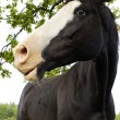Beautiful black horse — Stock Photo
