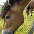 Horses are eating grass on the field — Stock Photo