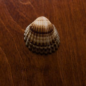 Cockleshell on a table — Stock Photo
