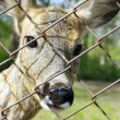 Deer in hutch - Stock Photo
