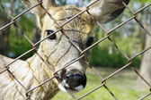 Deer in hutch — Stock Photo