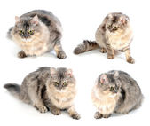 Fluffy cute cat — Stock Photo