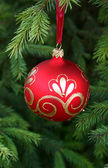 Firtree with red christmas ball — Stock Photo