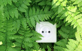 Green nature energy, socket in the fern — Stock Photo