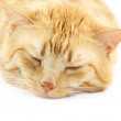 Big red sleeping cat closeup — Stock Photo