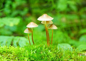 Bunch of autumnal fungi — Stock Photo