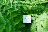 Nature energy concept, socket in the fern — Stock Photo