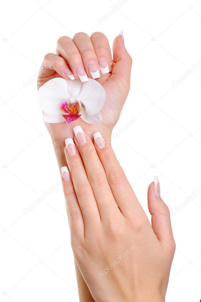 Beautiful elegant woman hand with french manicure hold the white flower  Stock Photo #1519619