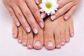 Cura della pelle di un piedi femminili di bellezza — Foto Stock
