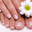 Ell-groomed female toes — Stock Photo