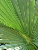 Palm branch — Stock Photo