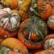Stock Photo: Multicolored squash