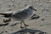 Sea Gull on beach — Stock Photo