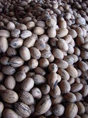 Harvested Pecans — Stock Photo