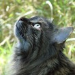 Tabby cat outside gazing up — Stock Photo