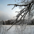 Foto Stock: Winter landscape