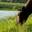 Cow on meadow — Stock Photo #1420508