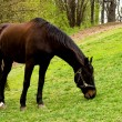 Horse on a meadow — Stock Photo #1421140