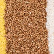 millet, buckwheat, rice background — Stock Photo