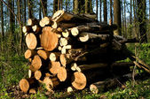 Truncate wood — Stock Photo