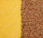 Buckwheat and millet background — Stock Photo