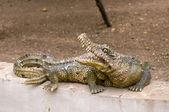 Crocodile statue — Stock Photo