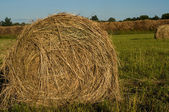 Haystack on the meadow — Stock Photo