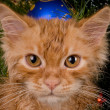 Kitten and christmas tree - 图库照片