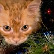 Kitten and christmas tree — Stock Photo