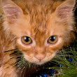 Kitten and christmas tree - Stockfoto