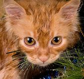 Kitten and christmas tree — Stock Photo