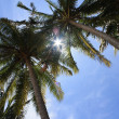 COCONUT TREES ON BEACH — Stock Photo