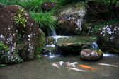 JAPANESE TEA GARDEN - WATERFALL AND KOI — Stock Photo