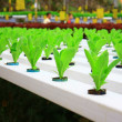 HYDROPONIC PLANTATION — Stock Photo
