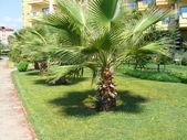Path in hotel park - Turkey — Stock Photo