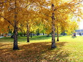 Autumn in Chelyabinsk park — Stock Photo