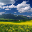 Meadow and mountains — Stock Photo