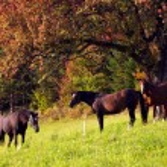 3 Horses — Stock Photo #2234515