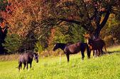 3 Horses — Stock Photo