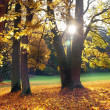 Sun & Trees - Stock Photo
