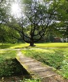 Sunshine & Tree — Stock Photo