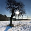Sun & Tree - Stock Photo